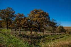 Fenced-In-Trees_3661