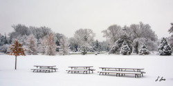 Snow-One-Showed-Picnic_1044