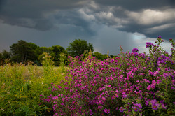 Aster Storm_7680
