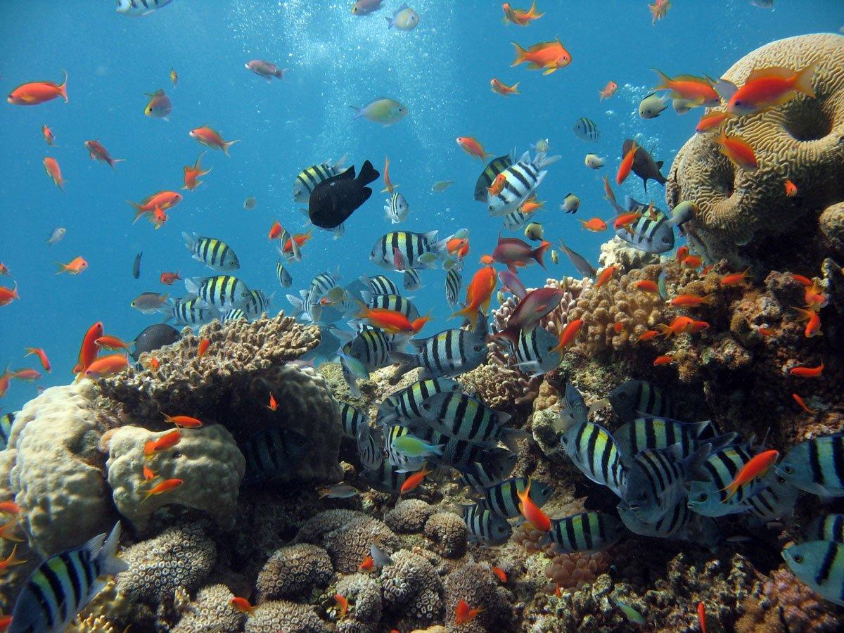 add on snorkel tour