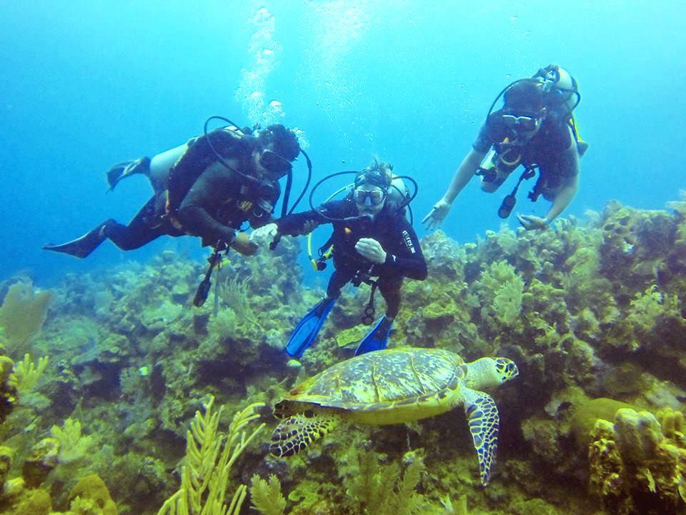 seadivers13