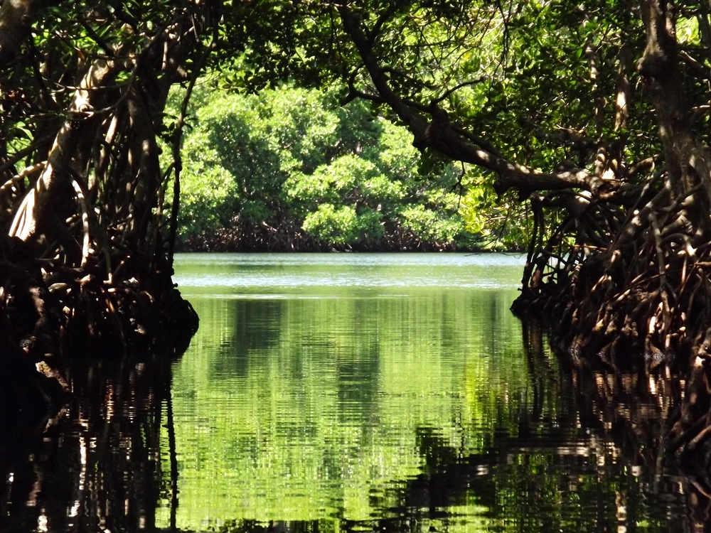 Exiting the mouth of the mangroves