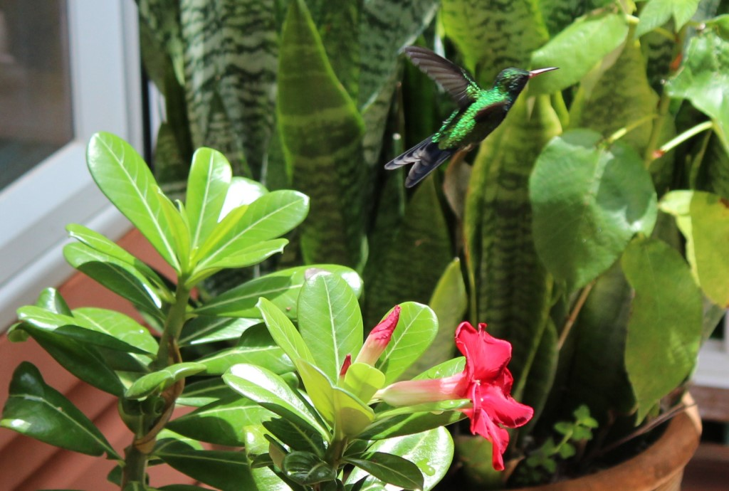 Humming birds everywhere!