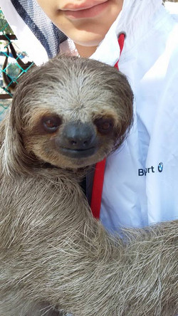 Sloth & Animal Sanctuary