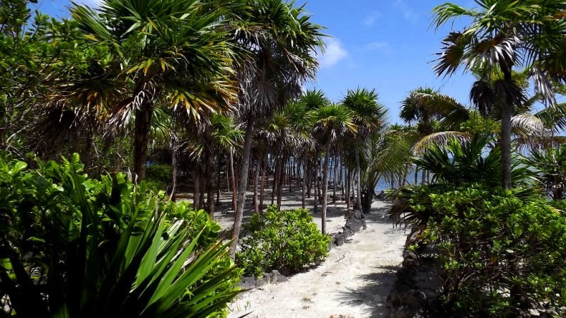 Walking trails around the island