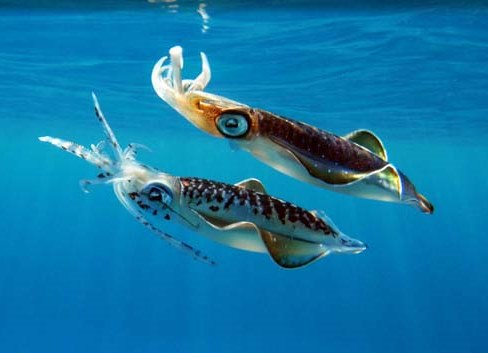 school squid