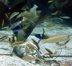 Private Snorkel Tour