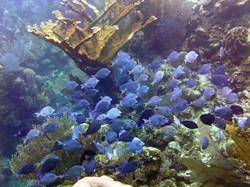 pristine reefs