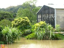 Botanical Conservatory