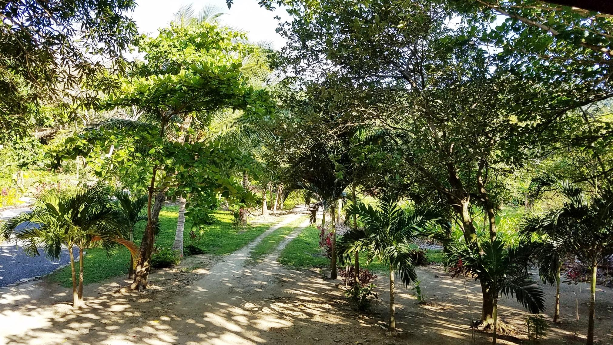 Garden driveway to villa