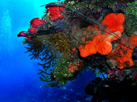 Second Largest Reefs In World