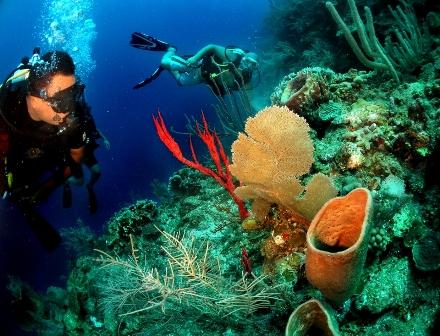 Divers Paradise!