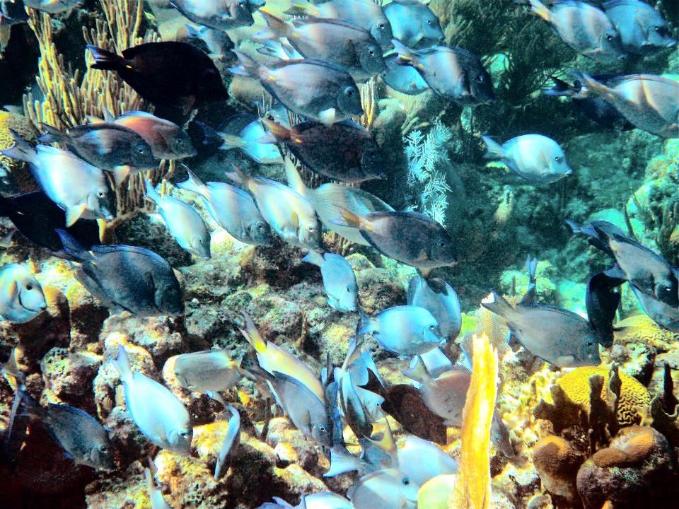 Roatan 2nd Largest Reefs in World