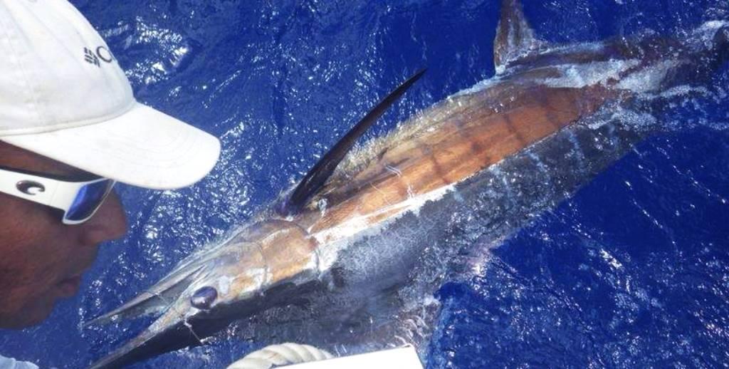 Deeo Sea - Catch & Release