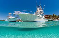 Yacht whale shark charter