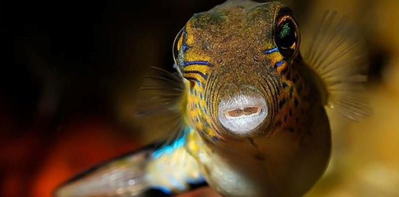 Dive into our aquarium
