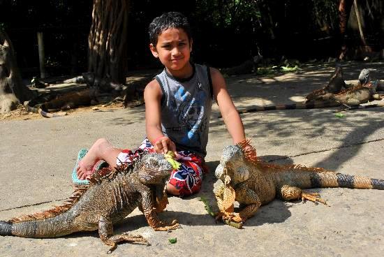 Iguana Park
