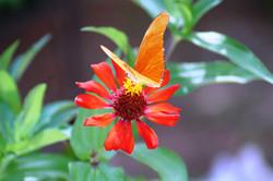 Nature around gardens