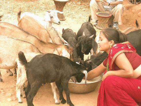 goat_edited.jpg