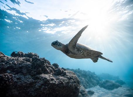 #14 – Life below Water