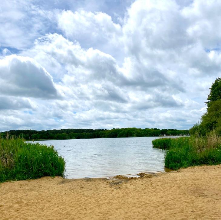 The sandy beach at Frensham Pond