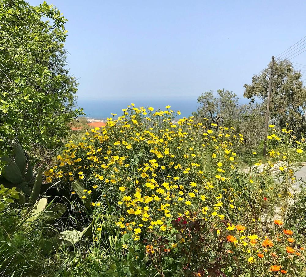 wild flower meadow in cyprus
