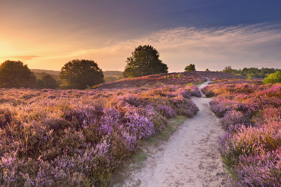 A path through endless hills with bloomi