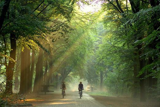 fietsen in bos