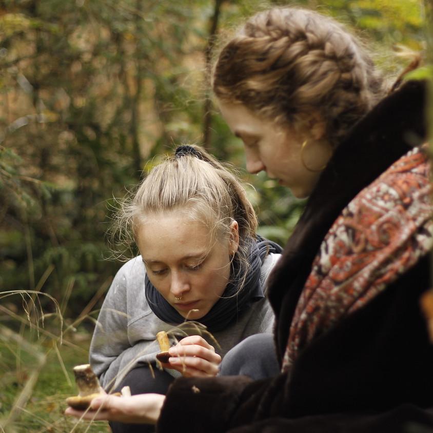 Fortællinger om lidenskab i nordisk mytologi