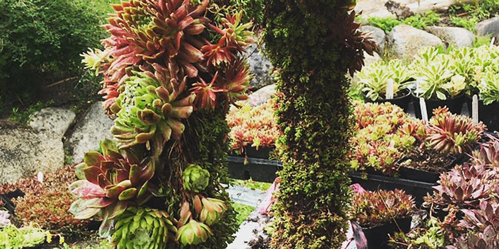 Succulent Wedding Hoop Instagram Story Tutorial