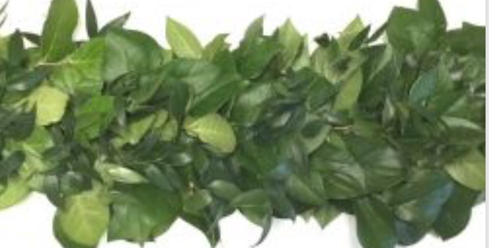 Greenery Garland Italian Ruscus & Salal