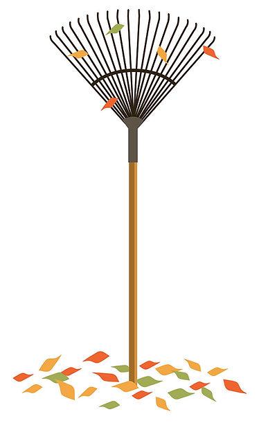 rake-tree.op.jpg