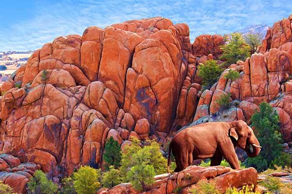 dells-elephant.op.jpg