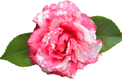 The Camellia City Association of Natural Health