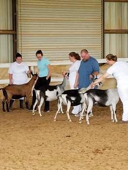 goat 3.png