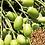 Thumbnail: Shampoing Chien Muddy Paws avec huile de neem