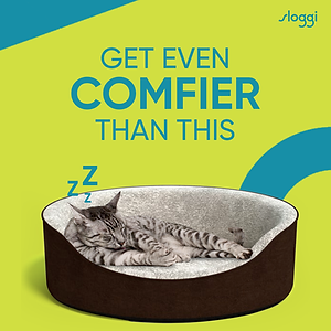 Sloggi- Cat (1).png