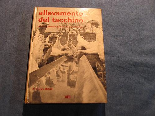 Giorgio Maletti - Allevamento del tacchino - 1965