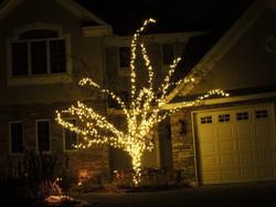 Warm White LED Tree Lighting