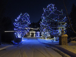 Multi-colored and Warm White Lights