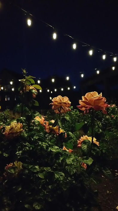 Special Event LED Lighting in St. Paul, MN
