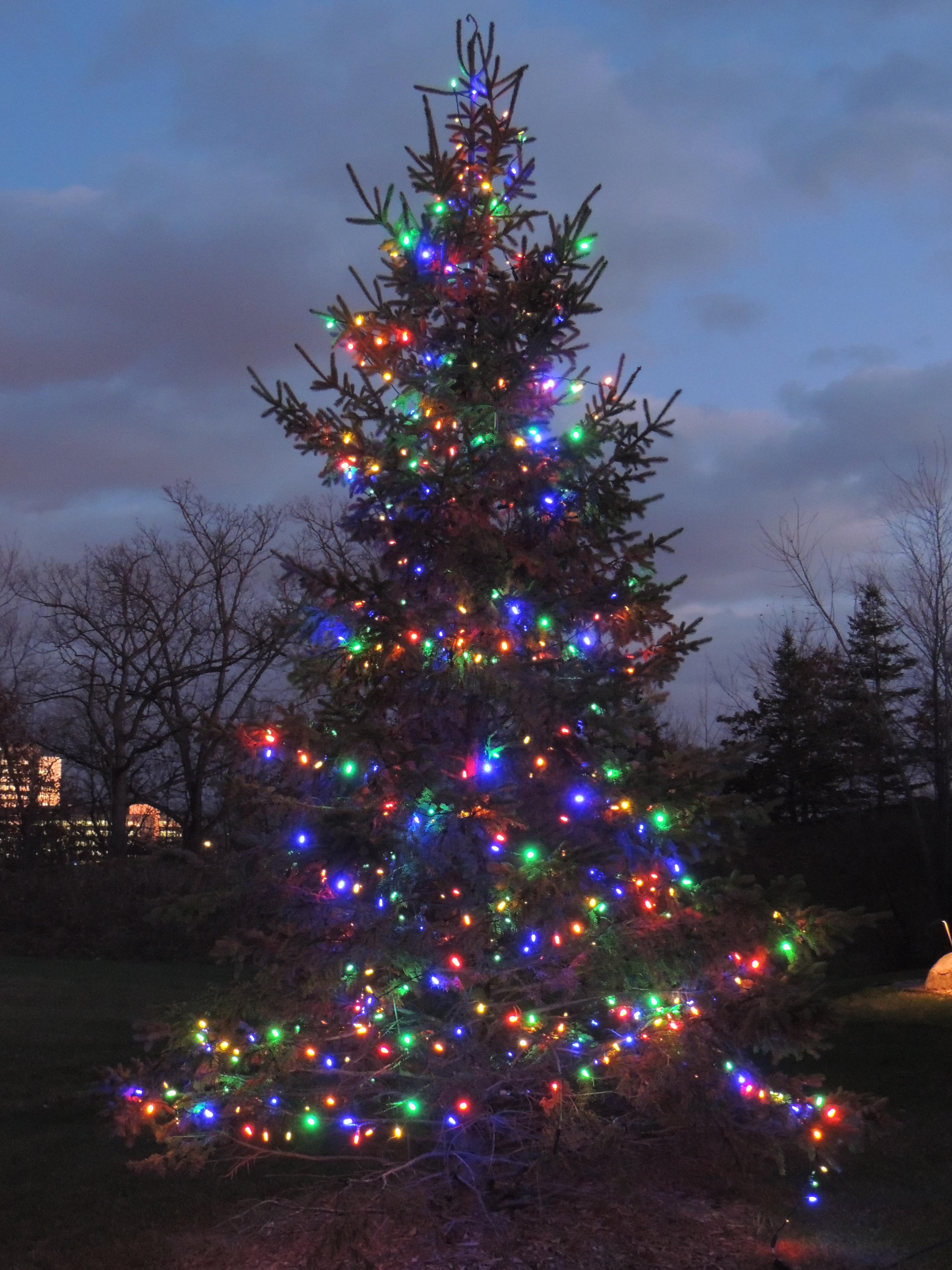 Multi-colored LED Tree Lighting