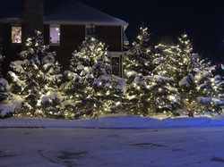 Warm White Christmas Tree Lighting