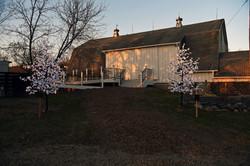 White Maple LED Trees