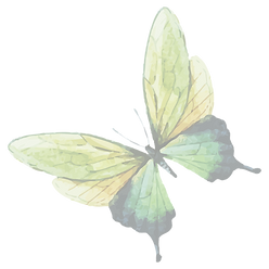 Watercolor%20Butterfly%207_edited.png