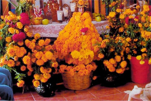Fall Flower Arranging October 30th 9 a.m. - 12 p.m.