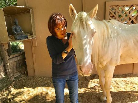 Animal Chiropractic Helps Tao