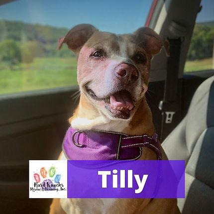 Tilly.jpg