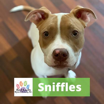 Sniffles (1).png