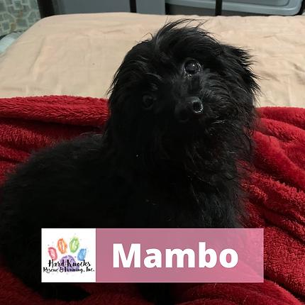 Mambo (1).png